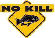 fish no kill na Biebrzy